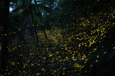 Firefly01_2